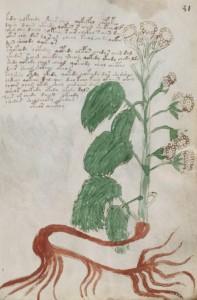 Eine Seite aus dem Manuskript